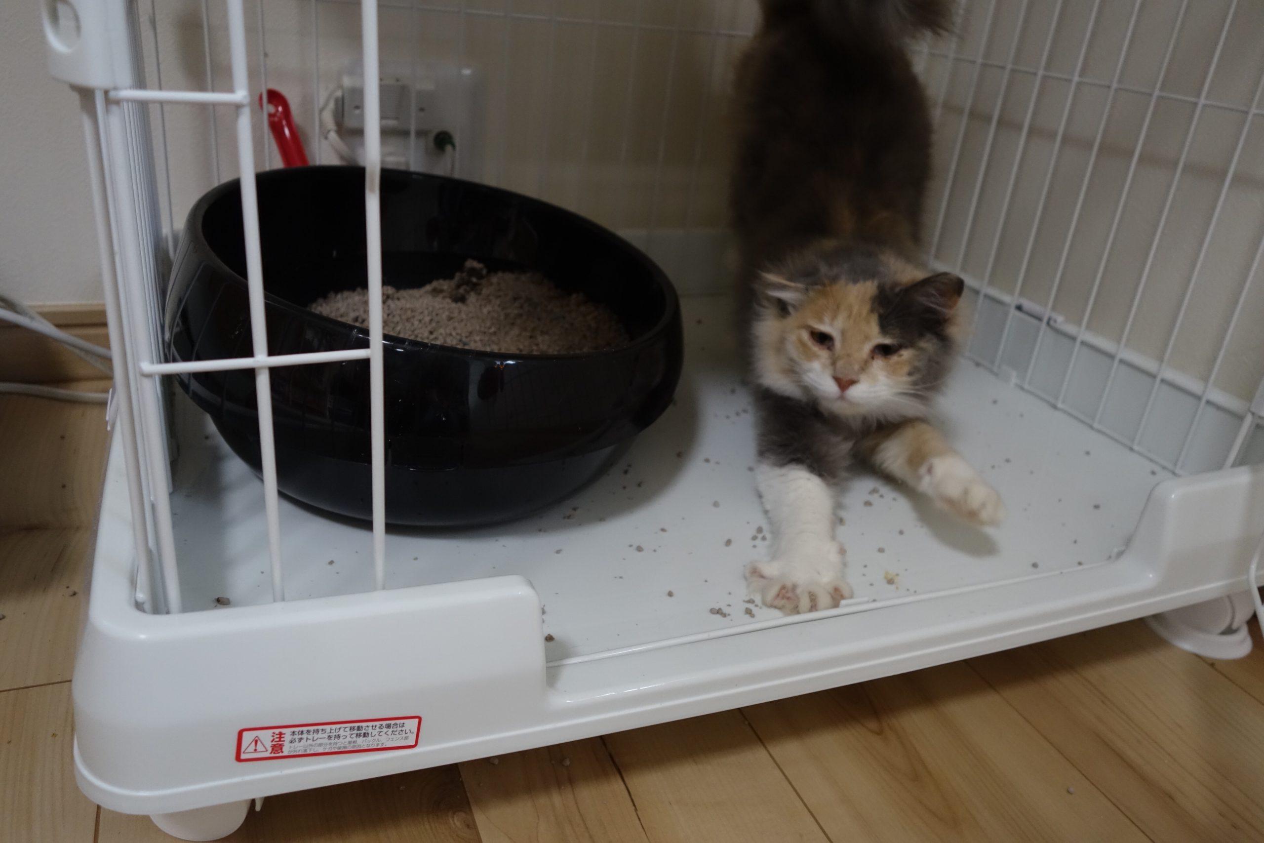 猫トイレの種類多すぎ!おすすめの猫トイレは?