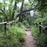 金沢自然公園の植物区を散策した話